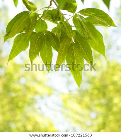 green leaves on a yellow background