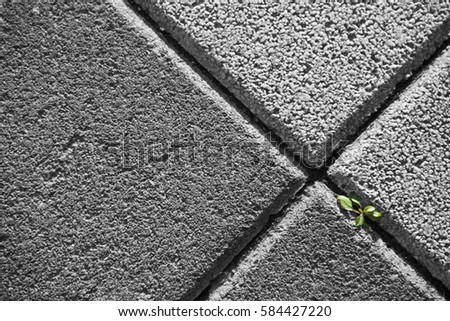 Green leaves on Black & White ground