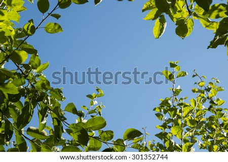 Green leaves on blue sky background at sunny day - stock photo