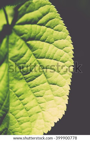 green leaves on blue sky background - vintage film effect - stock photo