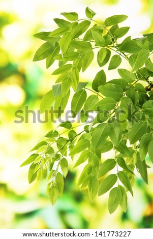 Green leaves on bright background