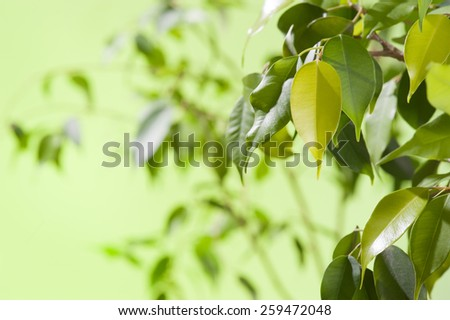 Green leaves on green background - stock photo