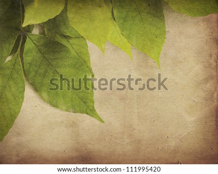 Green leaves on old grunge antique paper texture