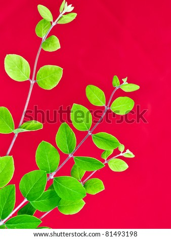 green leaves on red background - stock photo
