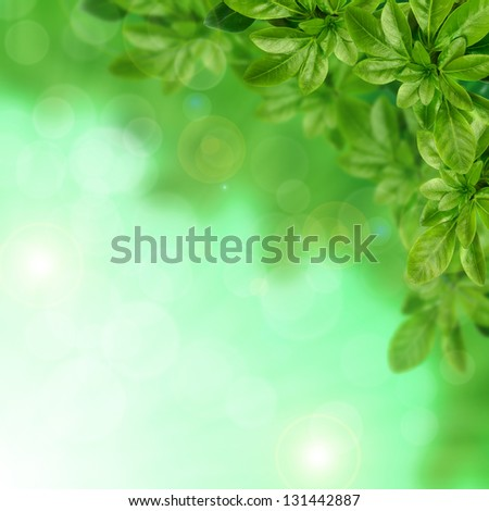 Green leaves on the blurred background