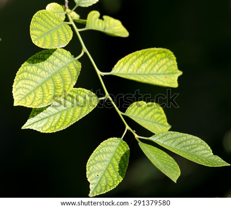 green leaves on the tree in nature at night - stock photo