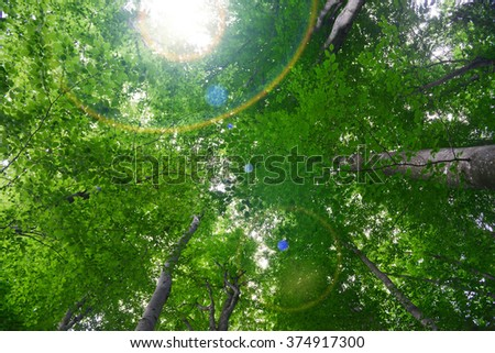 green leaves on tree, bottom view - stock photo