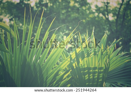 Green leaves on vintage background. - stock photo