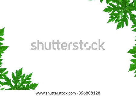 Green leaves on white background. - stock photo