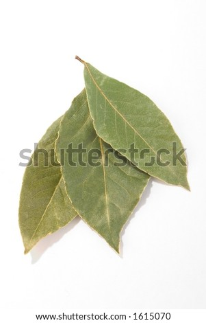 green leaves on white isolated background