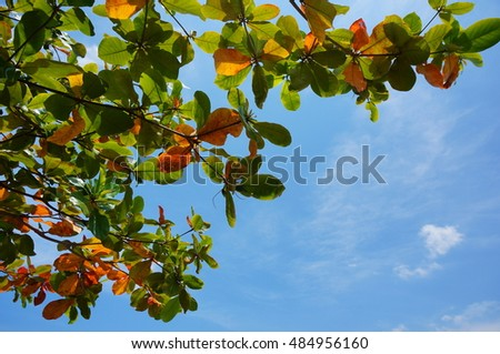 Green leaves over blue sky background, spring season natural background. Closeup photo with selective focus