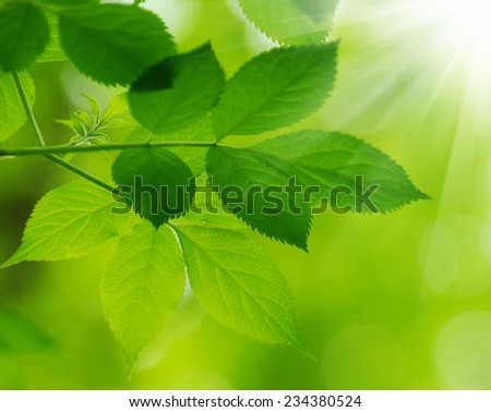 green leaves over green background - stock photo