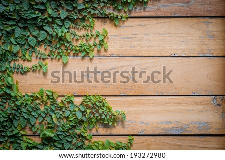 green leaves over plank wood texture - stock photo