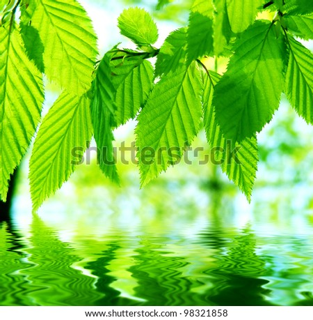 Green leaves over water reflection - stock photo