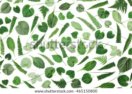 Green leaves pattern isolated on white background top view. Flat lay styling.