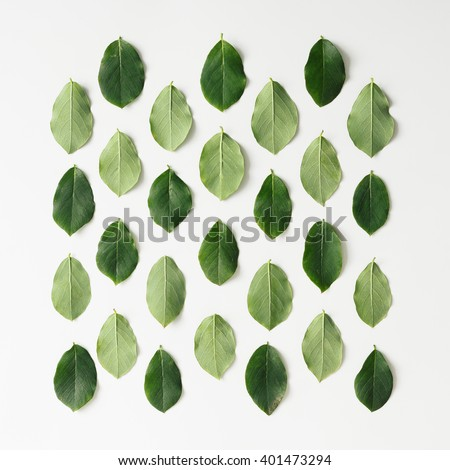 Green leaves pattern on white background. Flat lay. - stock photo