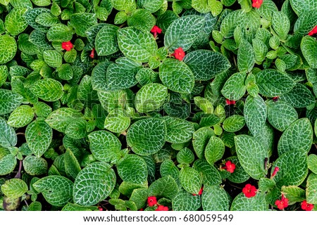 Green leaves plants floor small red stock photo royalty for Green floor plant