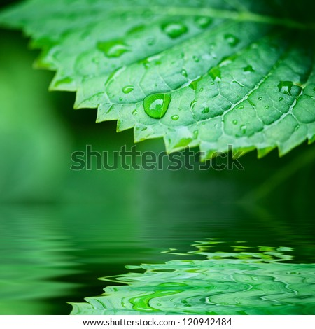 Green leaves reflecting in the water, shallow focus - stock photo