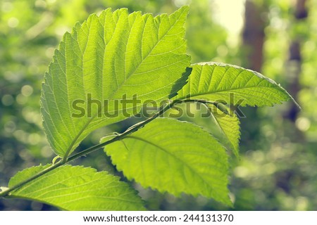 Green leaves, shallow DOF - stock photo