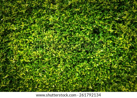Green leaves surface - stock photo