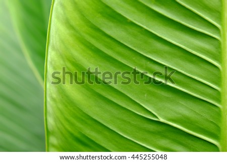 Green leaves texture, abstract pattern background - stock photo