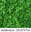 green leaves texture background - stock photo