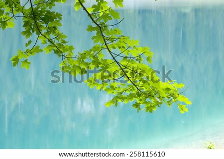 green leaves tree branch against reflection of the woods on the Black Lake surface in Durmitor National Park, Zabljak - stock photo