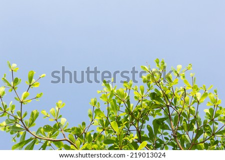 Green leaves tree with blue sky background - stock photo