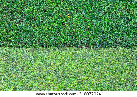 Green leaves wall  - stock photo