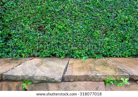 Green leaves wall and brick floor - stock photo