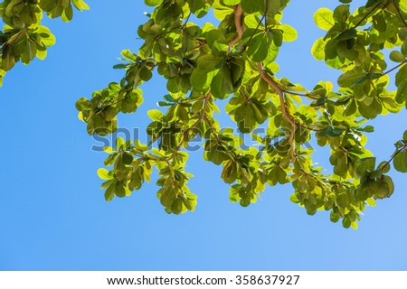 Green leaves with a bright sky.