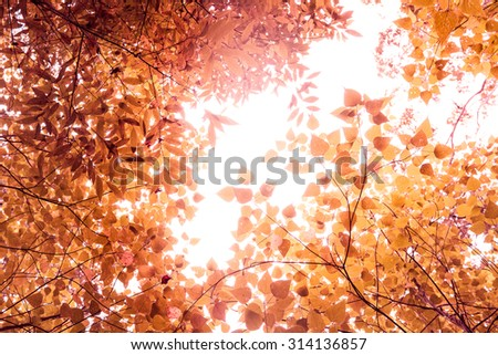 Green leaves with bright sunshine background,vintage