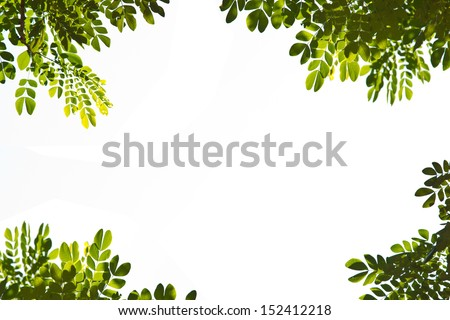 Green leaves with frame on white background