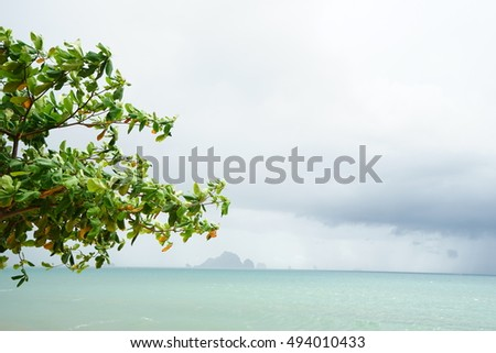 Green leaves with seascape background and space area for message at daytime.