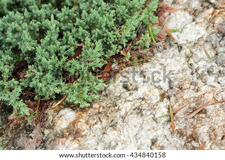 green leaves with stone texture in the garden - stock photo