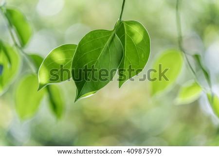 green leaves with sun light bokeh - stock photo