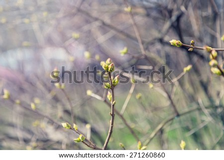 Green leaves with sunlight, selective focus (very shallow depth of field) - stock photo