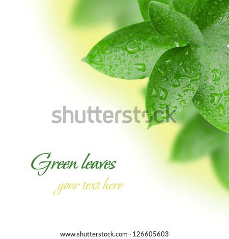 Green leaves with water drops on a white background
