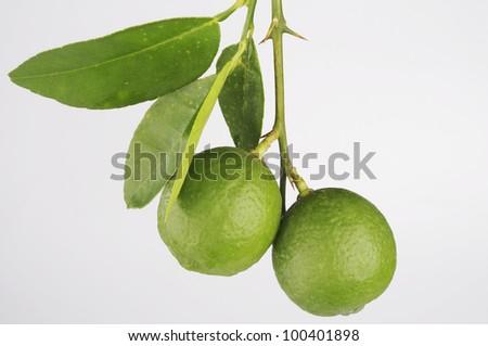 Green lemon on white background - stock photo