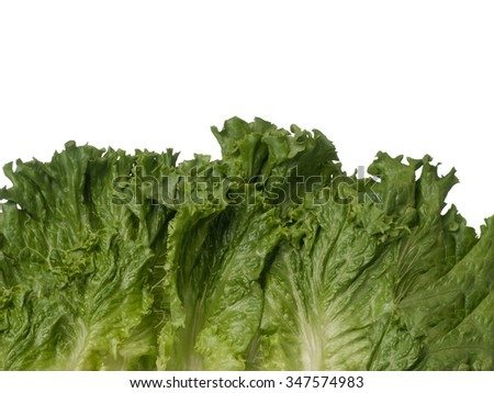Green lettuce bottom border isolated on white background