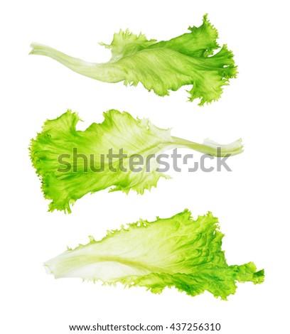 green lettuce leaf - stock photo