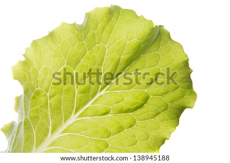 Green lettuce leaf close up isolated on white background. - stock photo