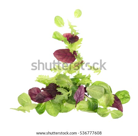 Green lettuce salad leafs isolated on white