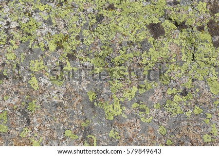 Green lichen on rock stone