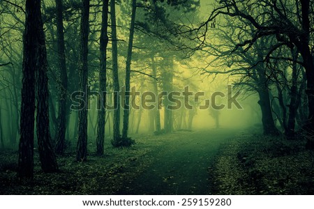 Green light in a mysterious forest with fog - stock photo