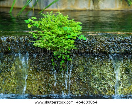 Green little tree  in cool nature garden