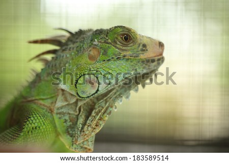Green Lizard Green Lizard finding food in the nature wild - stock photo
