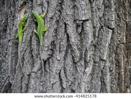 Green lizard - Green lizard with a long tail standing on a piece of wood - stock photo