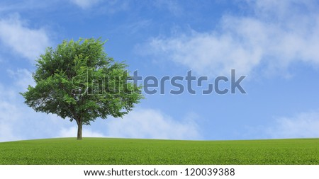 green lonely tree growing in a field - stock photo