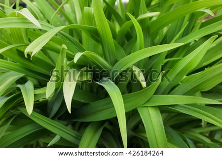 Green long leaves grass abstract background - stock photo